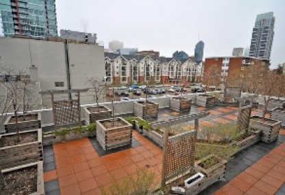 Rooftop garden at The Chocolate