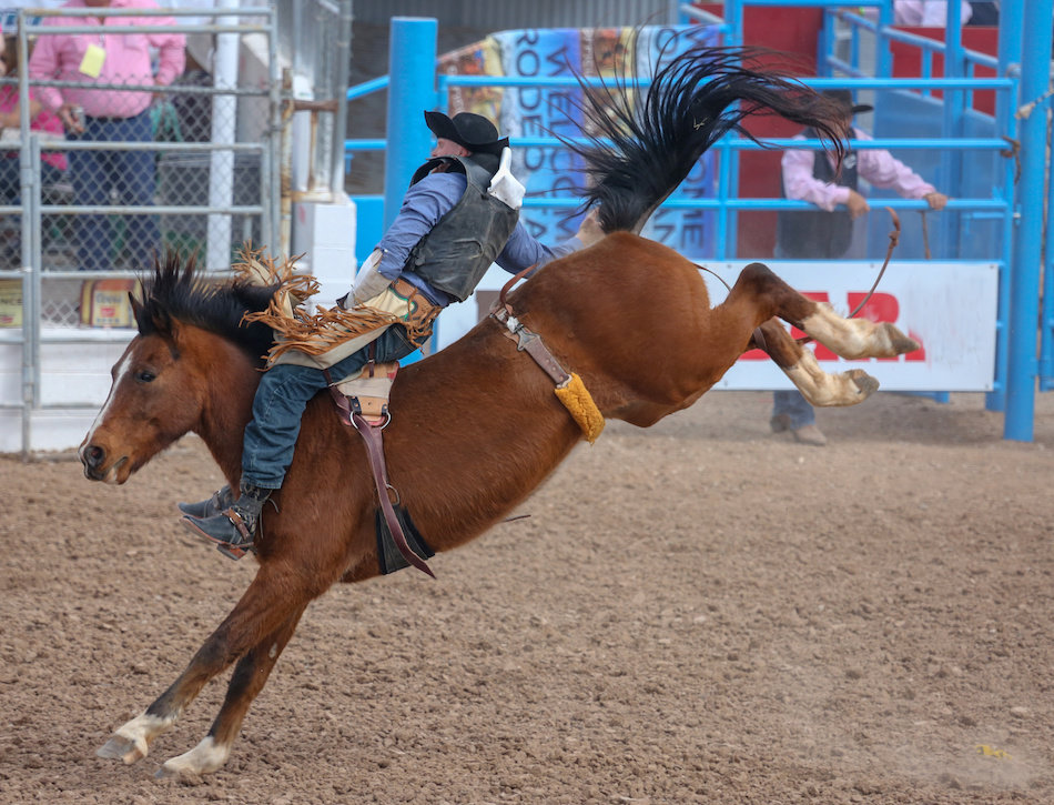 Visit the Calgary Stampede