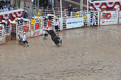 Calgary Stampede - Photo Credit: http://www.flickr.com/photos/ashleybayles/7606046038/